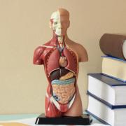 FORMATION PHYSIOLOGIE ECOLE ARNIKA